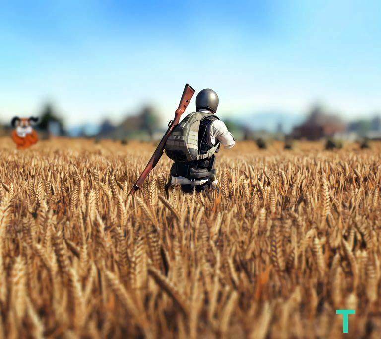 18. Wheat Field